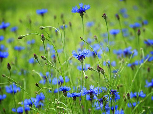 Les plantes sèches bio d'Essencialis