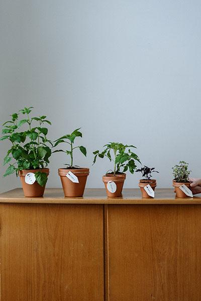 La culture des plantes par Essencialis